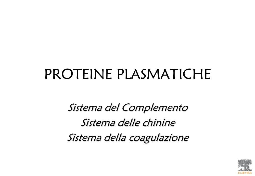 PROTEINE PLASMATICHE Sistema del Complemento Sistema delle chinine Sistema della coagulazione