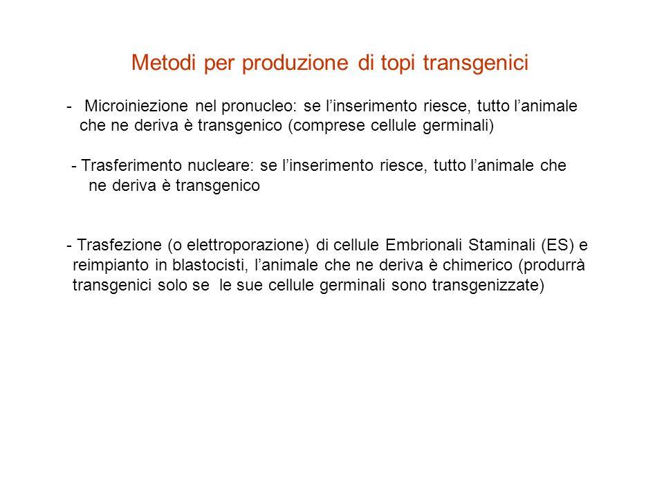 Metodi per produzione di topi transgenici - Microiniezione nel pronucleo: se linserimento riesce, tutto lanimale che ne deriva è transgenico (comprese