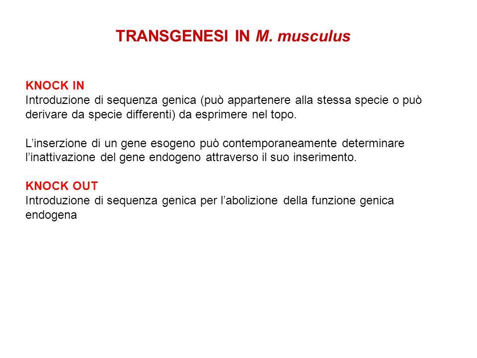 TRANSGENESI IN M. musculus KNOCK IN Introduzione di sequenza genica (può appartenere alla stessa specie o può derivare da specie differenti) da esprim