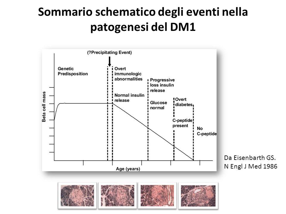 Sommario schematico degli eventi nella patogenesi del DM1 Da Eisenbarth GS. N Engl J Med 1986