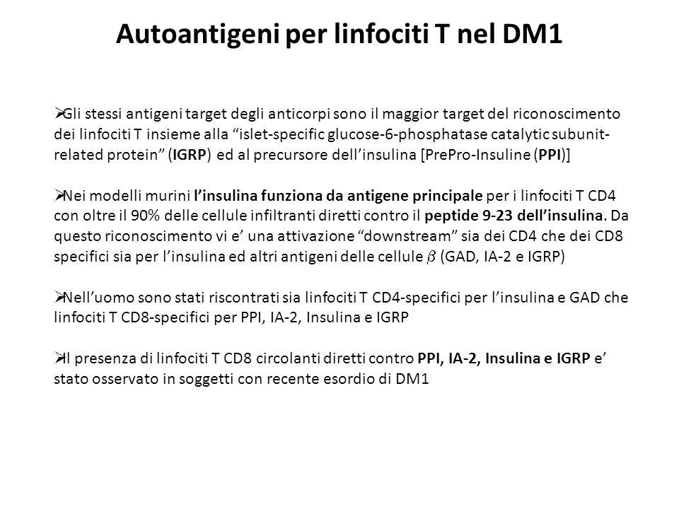 Autoantigeni per linfociti T nel DM1 Gli stessi antigeni target degli anticorpi sono il maggior target del riconoscimento dei linfociti T insieme alla