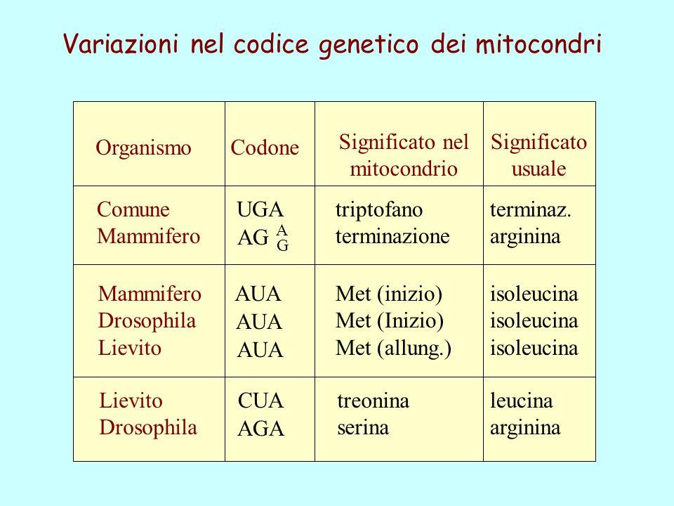 Variazioni nel codice genetico dei mitocondri Organismo Comune Mammifero Drosophila Lievito Drosophila Codone Significato nel mitocondrio Significato usuale UGA AG AUA CUA AGA A G triptofano terminazione terminaz.