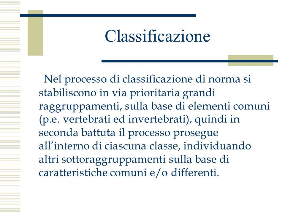 Classificazione Nel processo di classificazione di norma si stabiliscono in via prioritaria grandi raggruppamenti, sulla base di elementi comuni (p.e.
