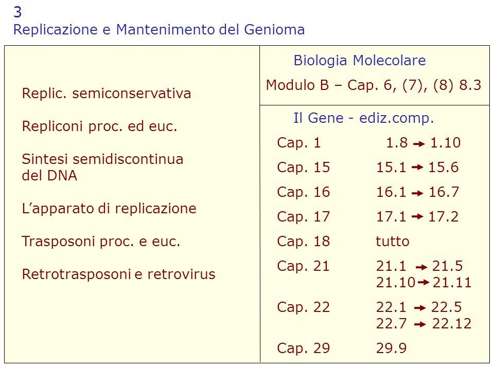 3 Replicazione e Mantenimento del Genioma Il Gene - ediz.comp. Biologia Molecolare Modulo B – Cap. 6, (7), (8) 8.3 Replic. semiconservativa Repliconi