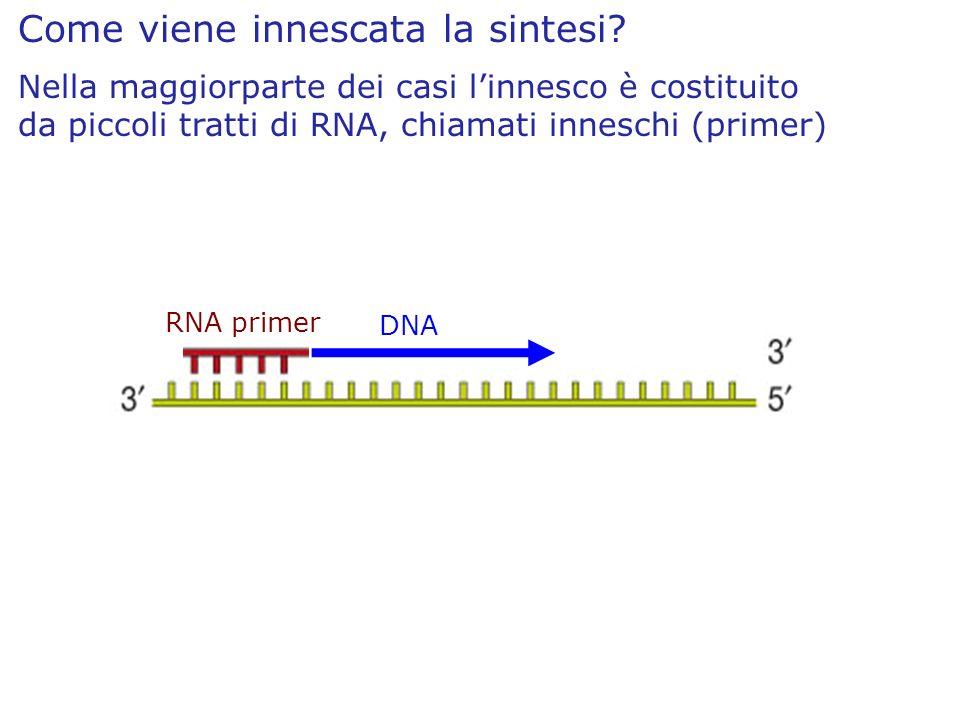Come viene innescata la sintesi? Nella maggiorparte dei casi linnesco è costituito da piccoli tratti di RNA, chiamati inneschi (primer) RNA primer DNA