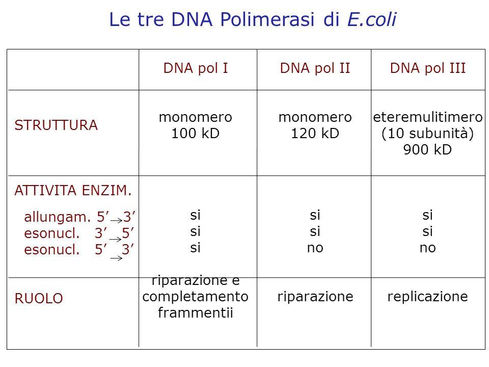 Le tre DNA Polimerasi di E.coli STRUTTURA ATTIVITA ENZIM. allungam. 5 3 esonucl. 3 5 esonucl. 5 3 RUOLO DNA pol I monomero 100 kD si riparazione e com