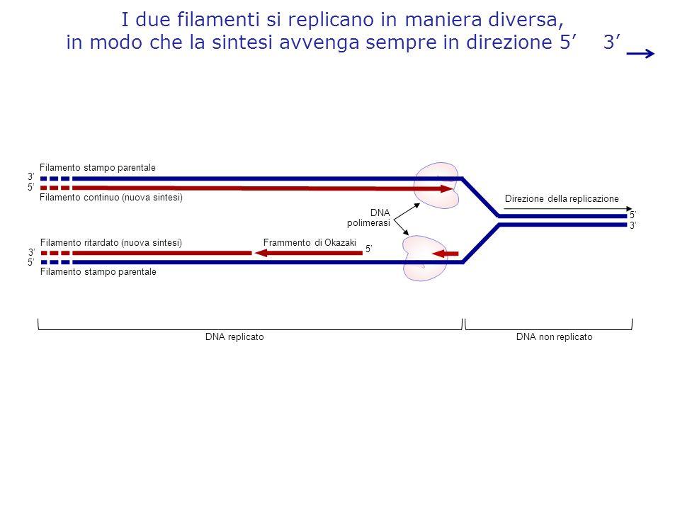 Direzione della replicazione DNA polimerasi Frammento di Okazaki DNA replicatoDNA non replicato 5 3 5 3 5 3 Filamento stampo parentale Filamento conti