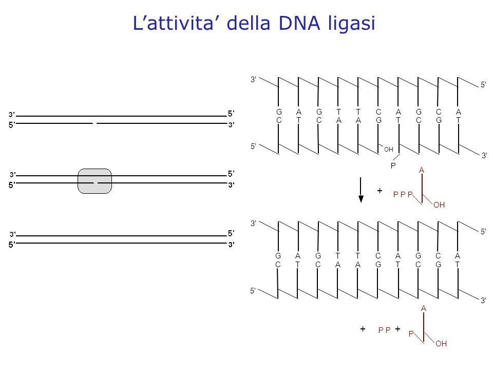 Lattivita della DNA ligasi