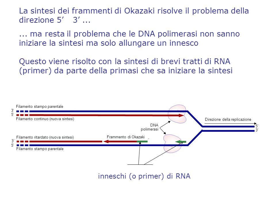 La sintesi dei frammenti di Okazaki risolve il problema della direzione 5 3...... ma resta il problema che le DNA polimerasi non sanno iniziare la sin
