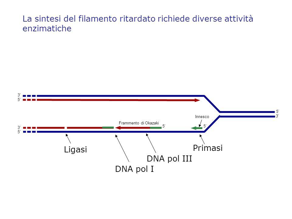 Frammento di Okazaki Innesco 5 5 3 5 3 5 3 5 Primasi DNA pol III DNA pol I Ligasi La sintesi del filamento ritardato richiede diverse attività enzimat