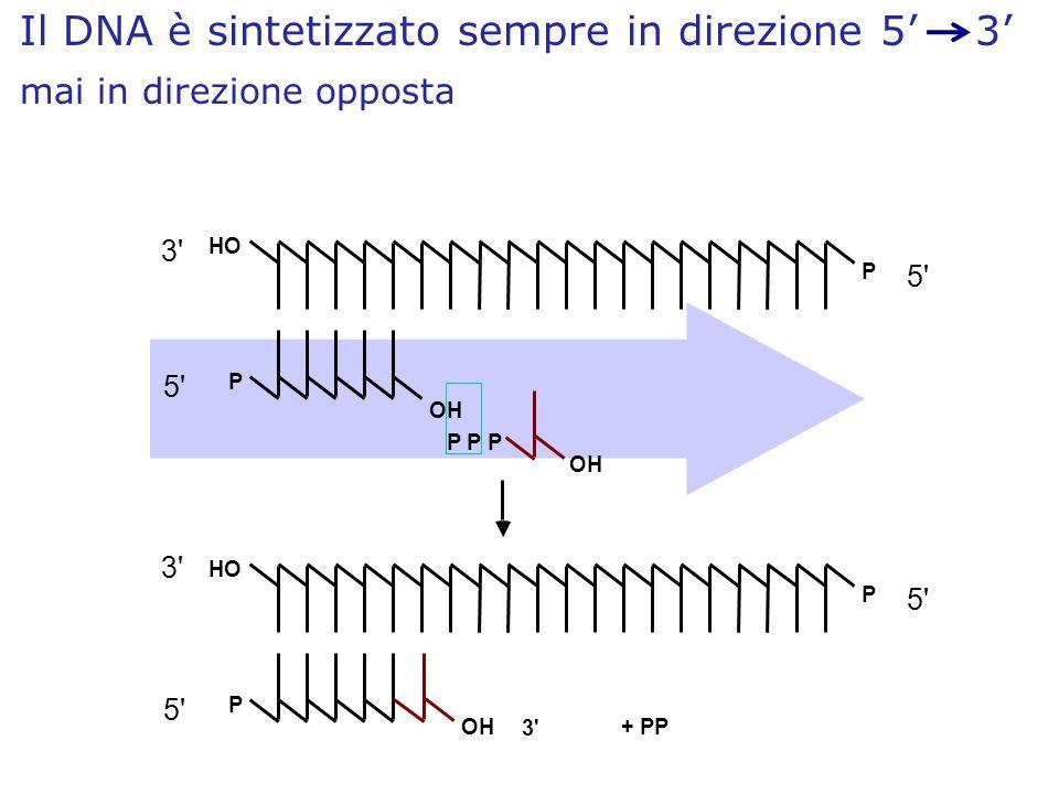P HO P OH P P P OH 3' 5' P HO P OH 3' 5' 3' + PP Il DNA è sintetizzato sempre in direzione 5 3 mai in direzione opposta