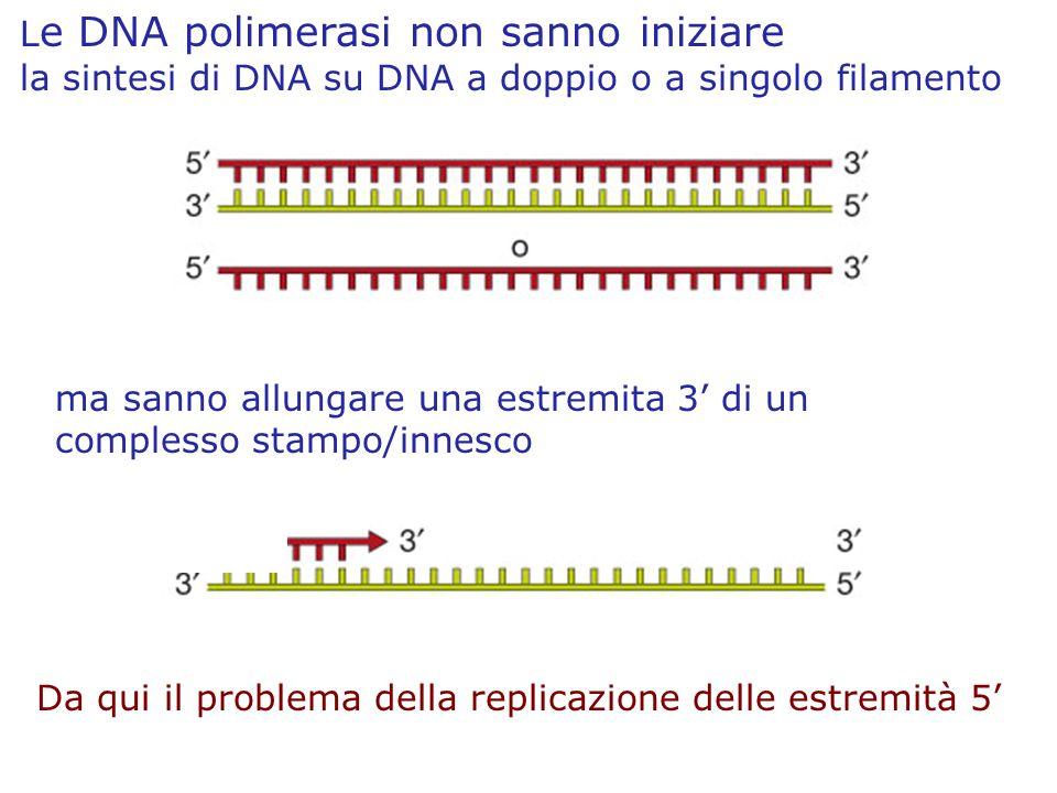 L e DNA polimerasi non sanno iniziare la sintesi di DNA su DNA a doppio o a singolo filamento Da qui il problema della replicazione delle estremità 5