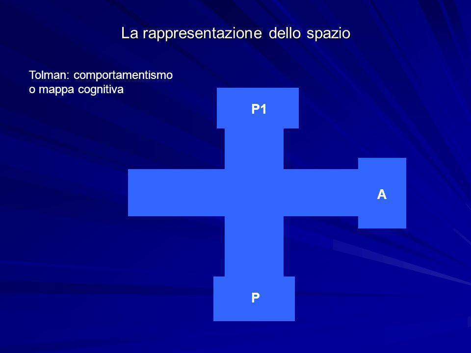 La rappresentazione dello spazio Tolman: comportamentismo o mappa cognitiva P P1 A