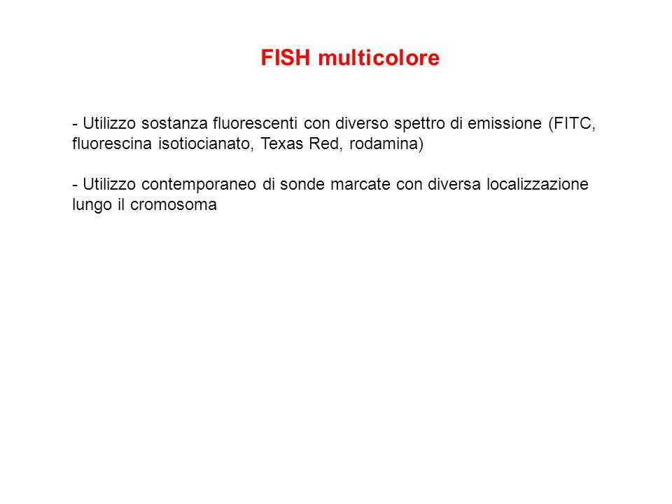 FISH multicolore - Utilizzo sostanza fluorescenti con diverso spettro di emissione (FITC, fluorescina isotiocianato, Texas Red, rodamina) - Utilizzo c