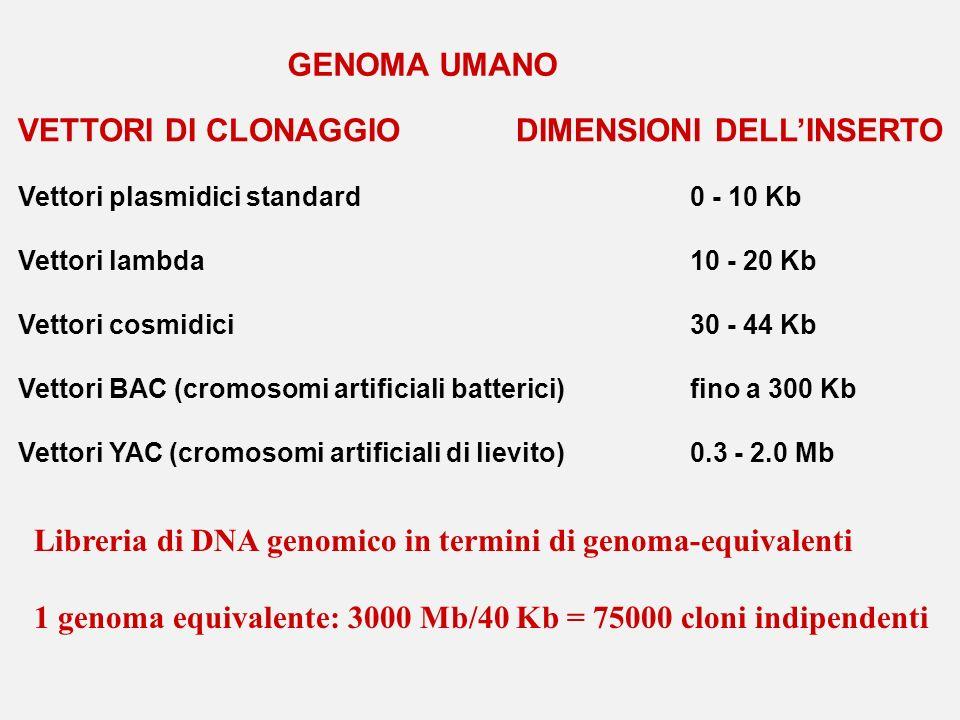 VETTORI DI CLONAGGIO DIMENSIONI DELLINSERTO Vettori plasmidici standard0 - 10 Kb Vettori lambda10 - 20 Kb Vettori cosmidici30 - 44 Kb Vettori BAC (cro