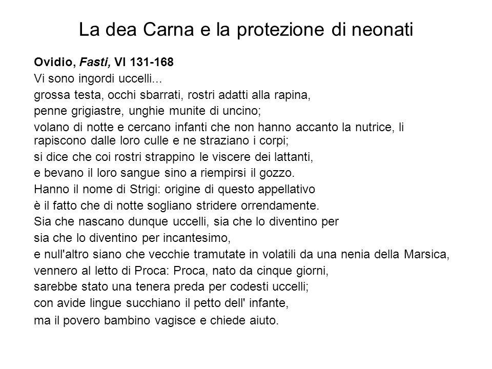 La dea Carna e la protezione di neonati Ovidio, Fasti, VI 131-168 Vi sono ingordi uccelli... grossa testa, occhi sbarrati, rostri adatti alla rapina,