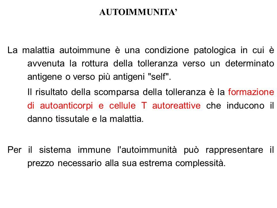 AUTOIMMUNITA La malattia autoimmune è una condizione patologica in cui è avvenuta la rottura della tolleranza verso un determinato antigene o verso pi