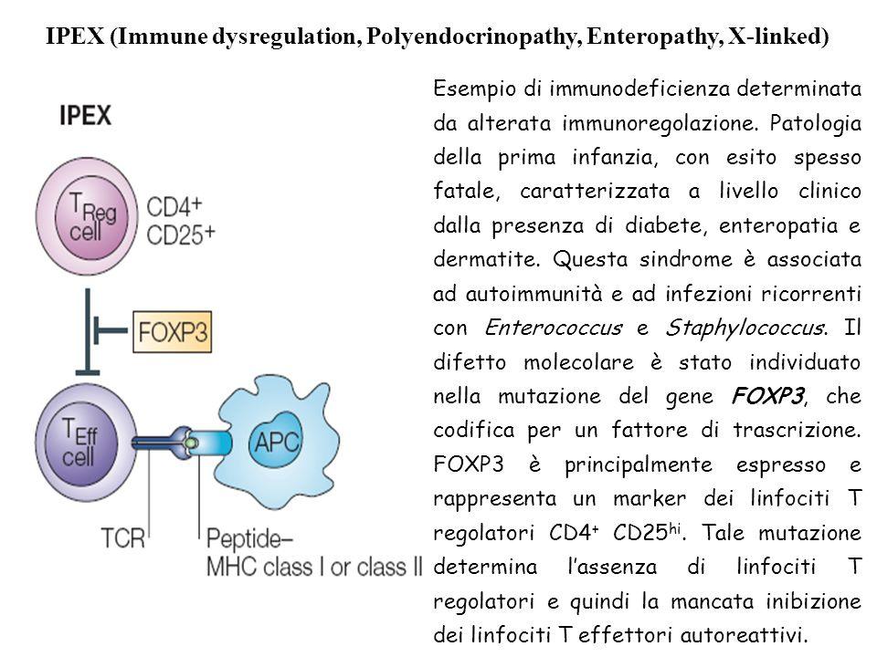 IPEX (Immune dysregulation, Polyendocrinopathy, Enteropathy, X-linked) Esempio di immunodeficienza determinata da alterata immunoregolazione. Patologi