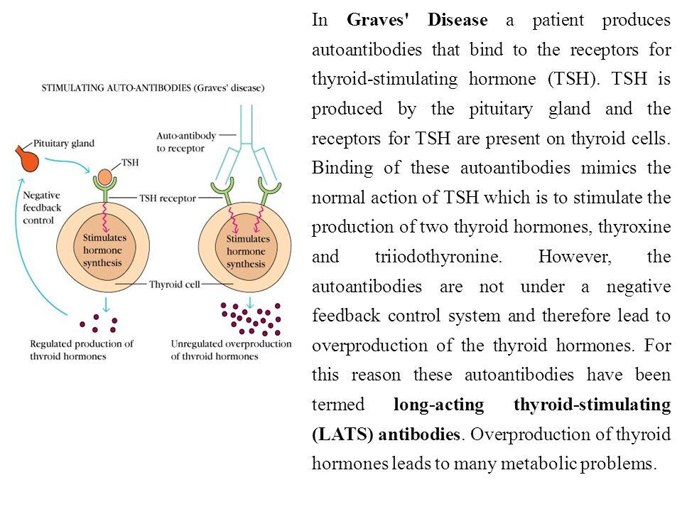 In Graves' Disease a patient produces autoantibodies that bind to the receptors for thyroid-stimulating hormone (TSH). TSH is produced by the pituitar