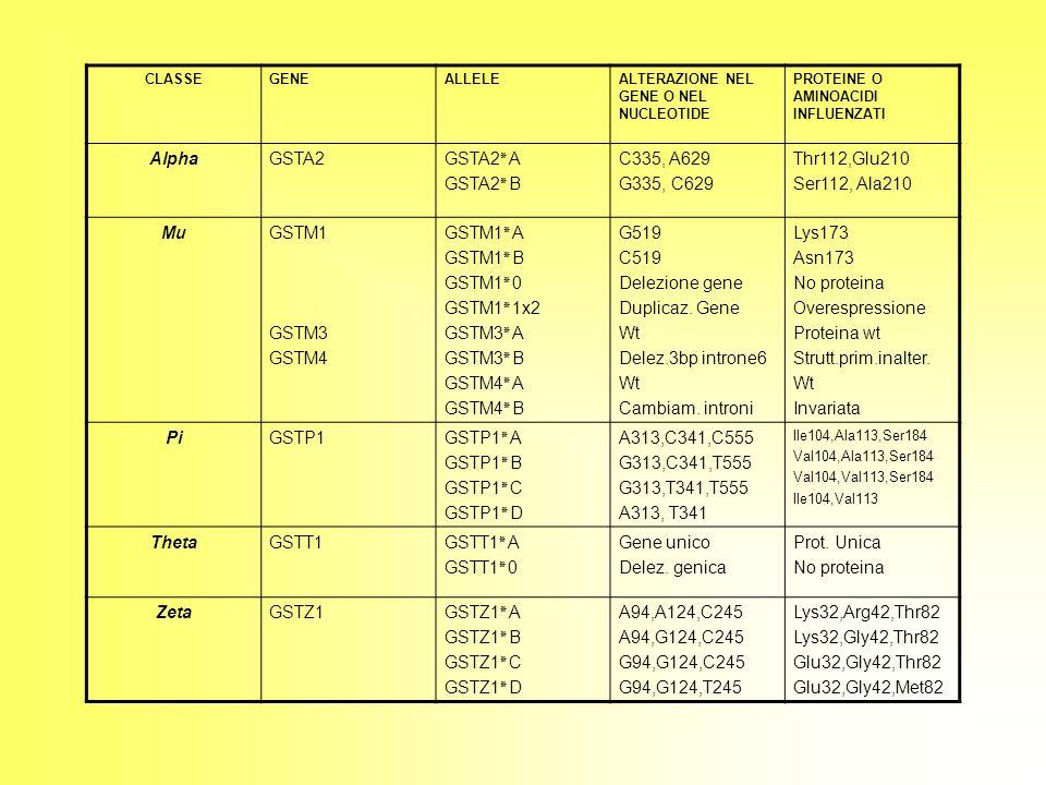 CLASSEGENEALLELEALTERAZIONE NEL GENE O NEL NUCLEOTIDE PROTEINE O AMINOACIDI INFLUENZATI AlphaGSTA2GSTA2٭A GSTA2٭B C335, A629 G335, C629 Thr112,Glu210