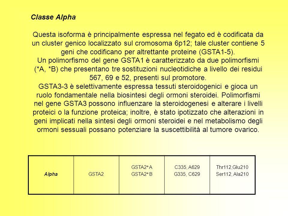 Classe Alpha Questa isoforma è principalmente espressa nel fegato ed è codificata da un cluster genico localizzato sul cromosoma 6p12; tale cluster co