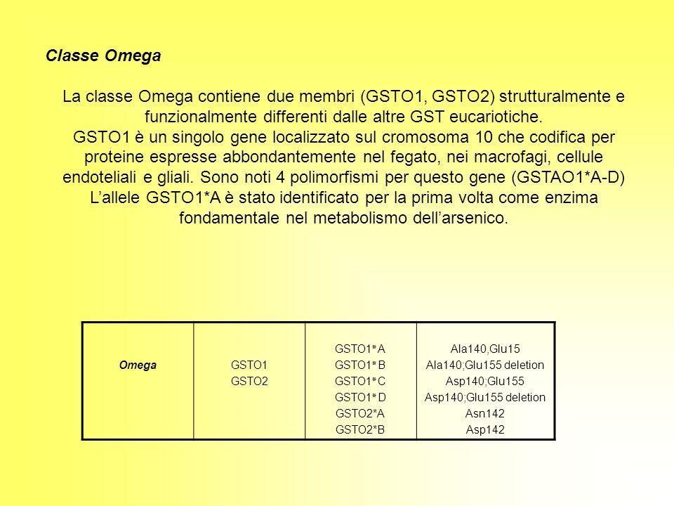 Classe Omega La classe Omega contiene due membri (GSTO1, GSTO2) strutturalmente e funzionalmente differenti dalle altre GST eucariotiche. GSTO1 è un s