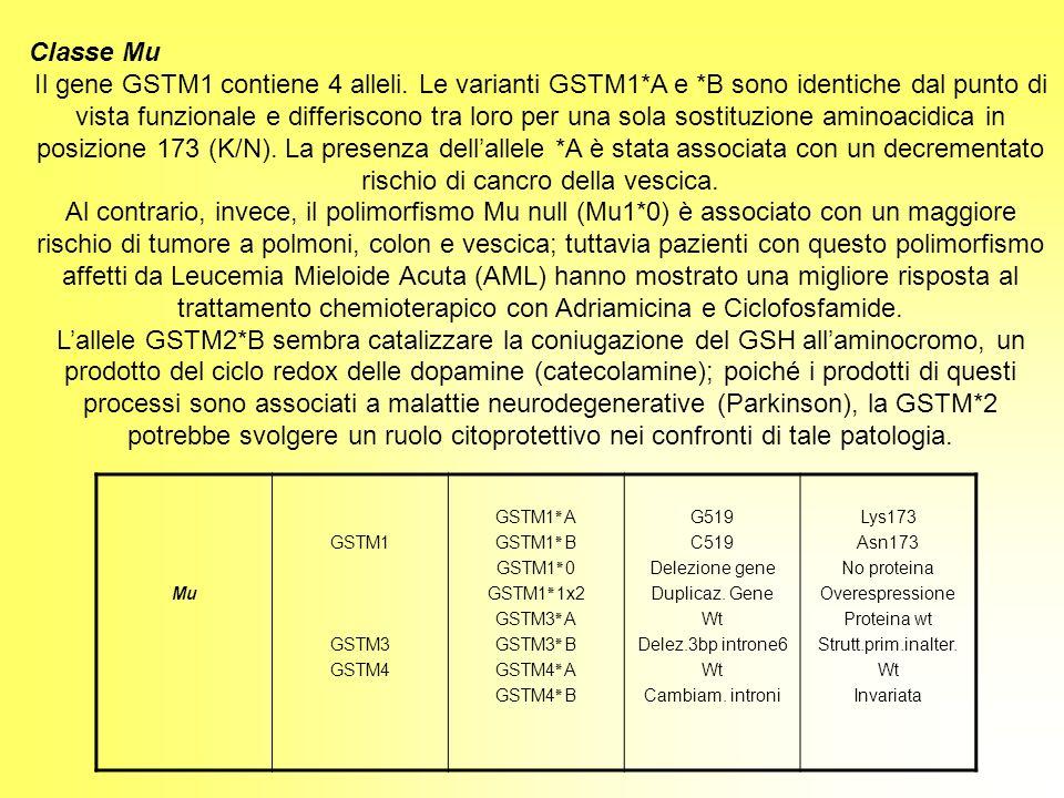 Classe Mu Il gene GSTM1 contiene 4 alleli. Le varianti GSTM1*A e *B sono identiche dal punto di vista funzionale e differiscono tra loro per una sola