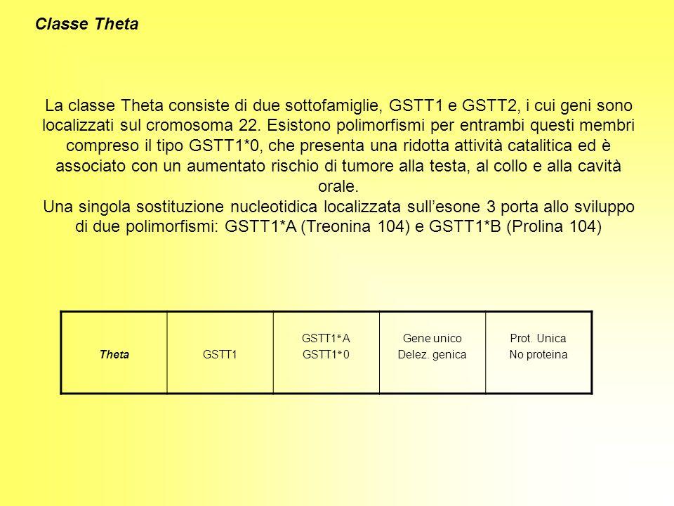Classe Theta La classe Theta consiste di due sottofamiglie, GSTT1 e GSTT2, i cui geni sono localizzati sul cromosoma 22. Esistono polimorfismi per ent