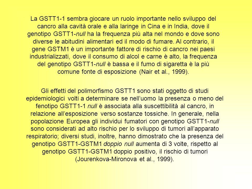 Gli effetti del polimorfismo GSTT1 sono stati oggetto di studi epidemiologici volti a determinare se nelluomo la presenza o meno del fenotipo GSTT1-1