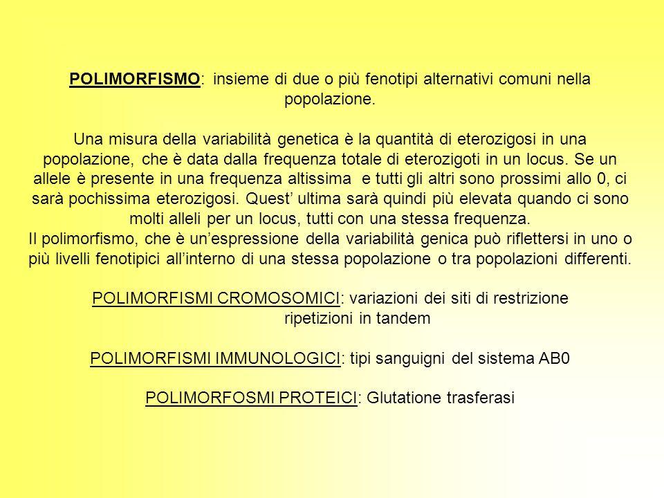 POLIMORFISMO: insieme di due o più fenotipi alternativi comuni nella popolazione. Una misura della variabilità genetica è la quantità di eterozigosi i