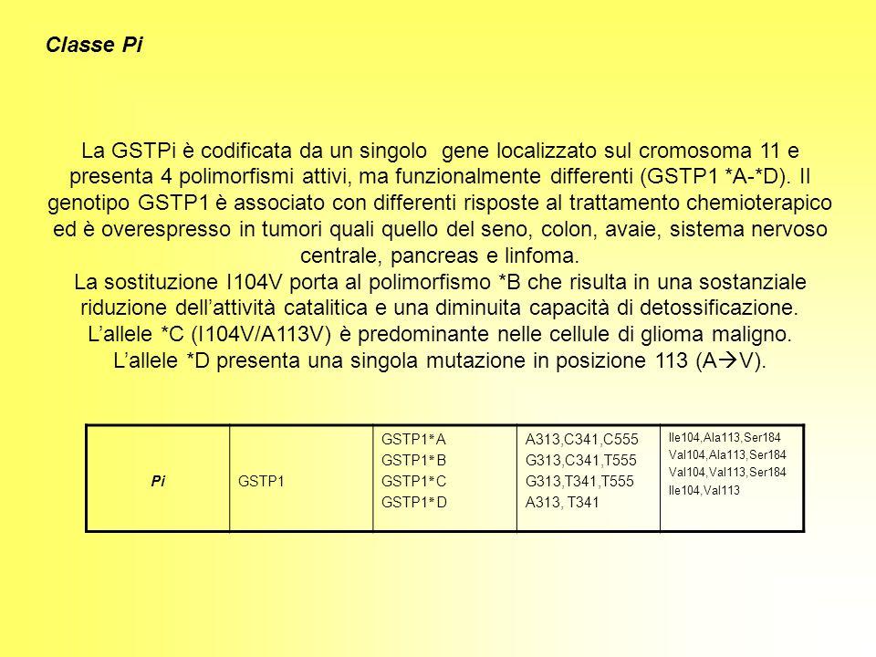 Classe Pi La GSTPi è codificata da un singolo gene localizzato sul cromosoma 11 e presenta 4 polimorfismi attivi, ma funzionalmente differenti (GSTP1