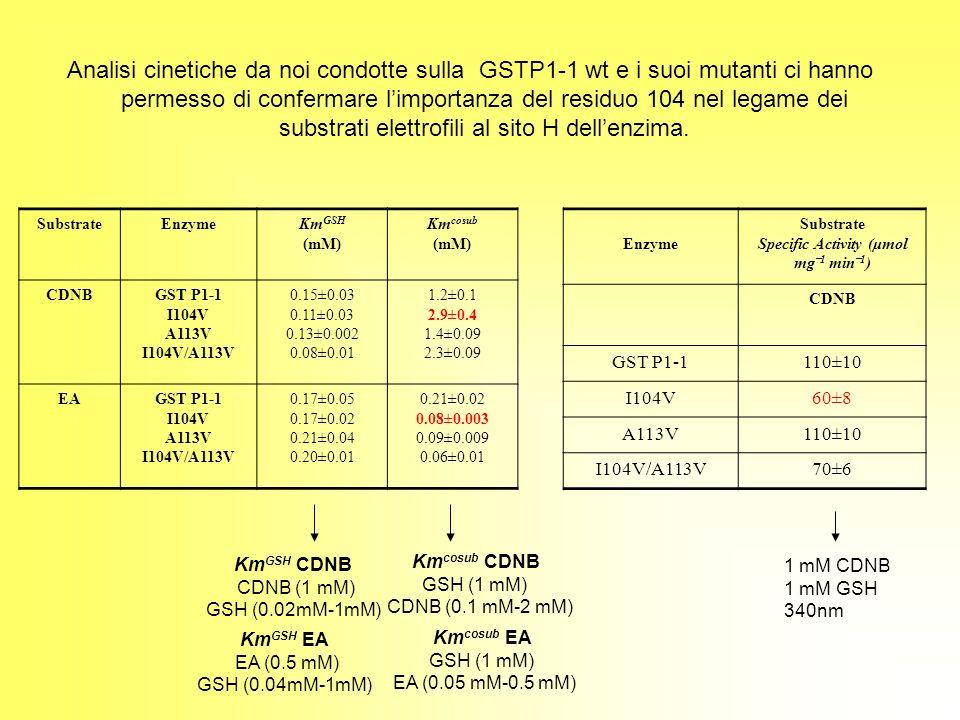 Analisi cinetiche da noi condotte sulla GSTP1-1 wt e i suoi mutanti ci hanno permesso di confermare limportanza del residuo 104 nel legame dei substra
