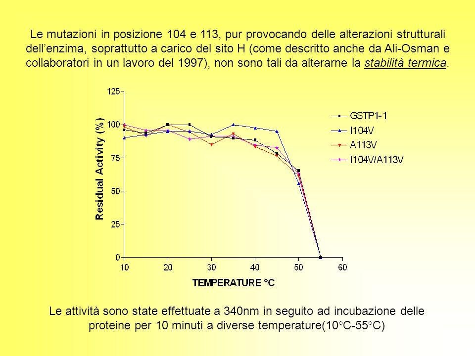 Le mutazioni in posizione 104 e 113, pur provocando delle alterazioni strutturali dellenzima, soprattutto a carico del sito H (come descritto anche da