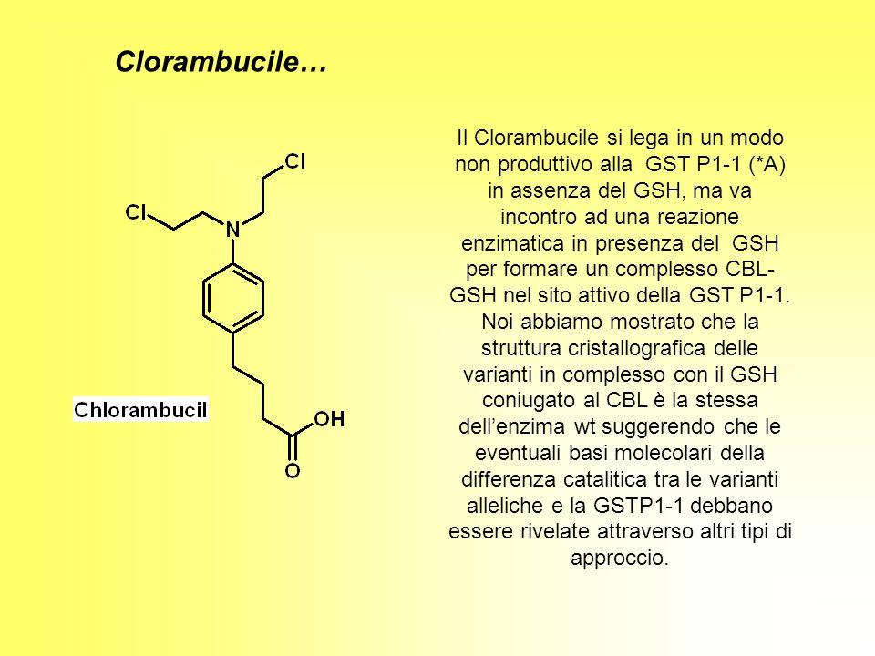 Il Clorambucile si lega in un modo non produttivo alla GST P1-1 (*A) in assenza del GSH, ma va incontro ad una reazione enzimatica in presenza del GSH
