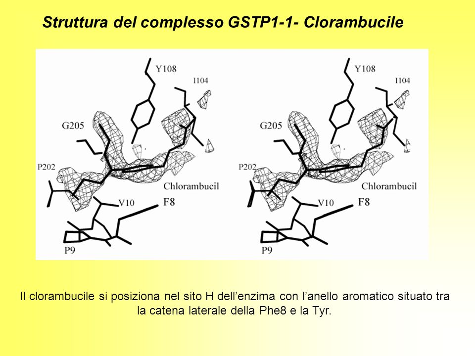 Il clorambucile si posiziona nel sito H dellenzima con lanello aromatico situato tra la catena laterale della Phe8 e la Tyr. Struttura del complesso G