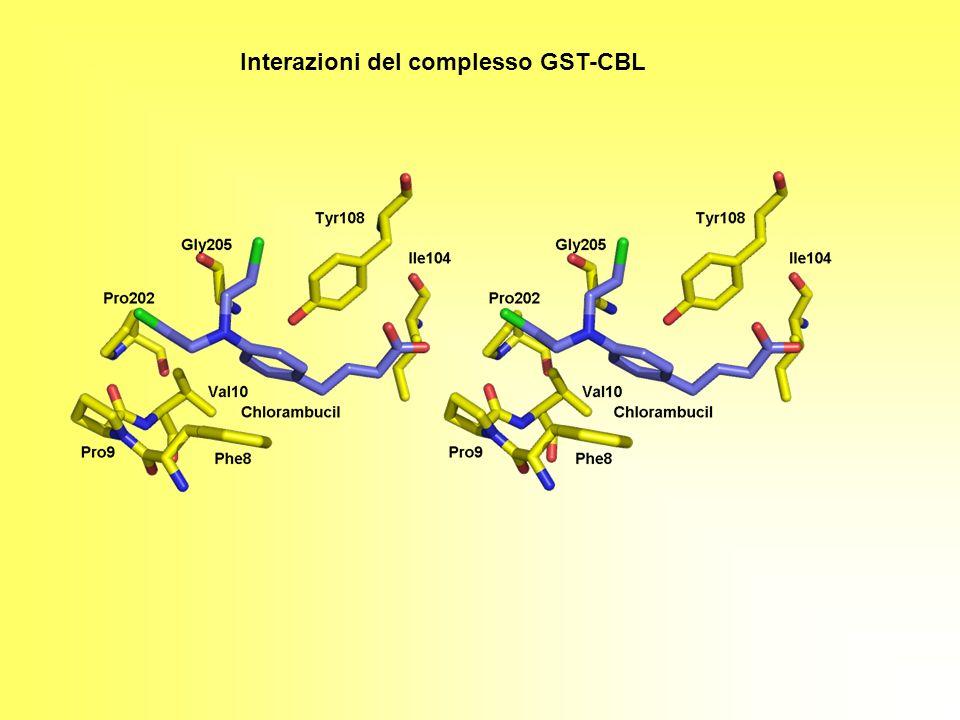 Interazioni del complesso GST-CBL