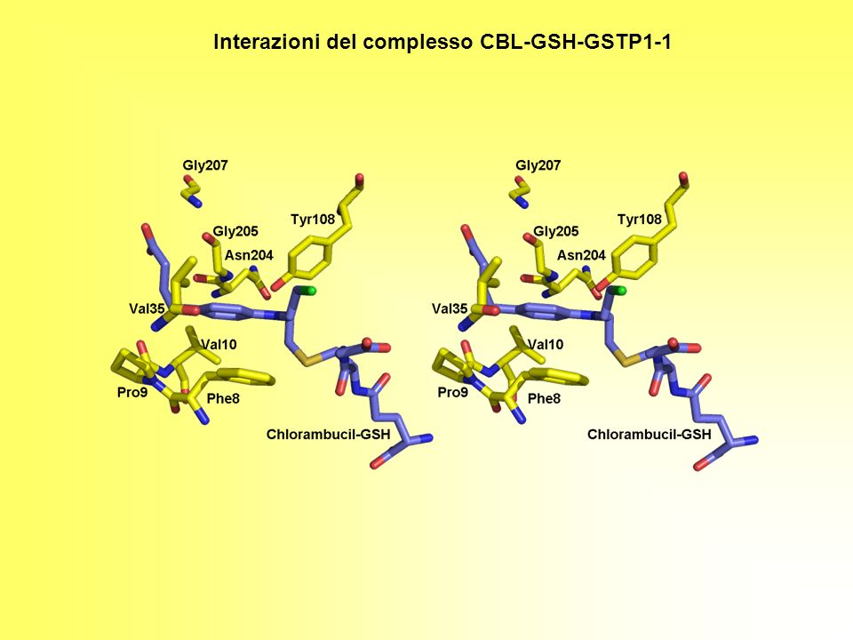 Interazioni del complesso CBL-GSH-GSTP1-1