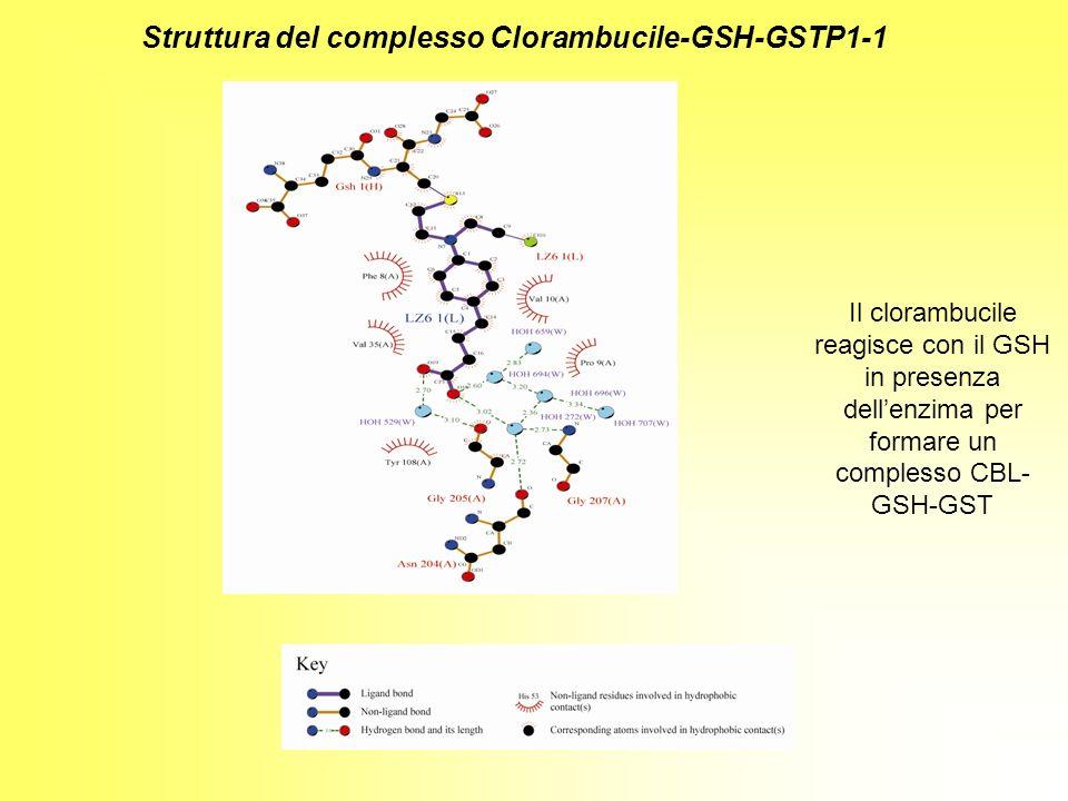 Struttura del complesso Clorambucile-GSH-GSTP1-1 Il clorambucile reagisce con il GSH in presenza dellenzima per formare un complesso CBL- GSH-GST