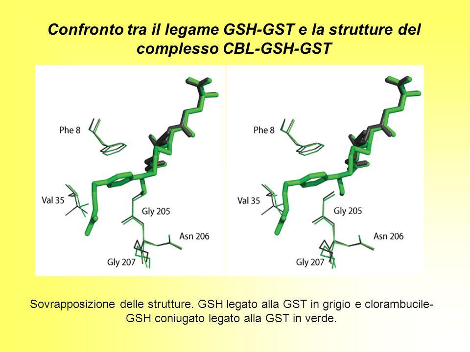Sovrapposizione delle strutture. GSH legato alla GST in grigio e clorambucile- GSH coniugato legato alla GST in verde. Confronto tra il legame GSH-GST