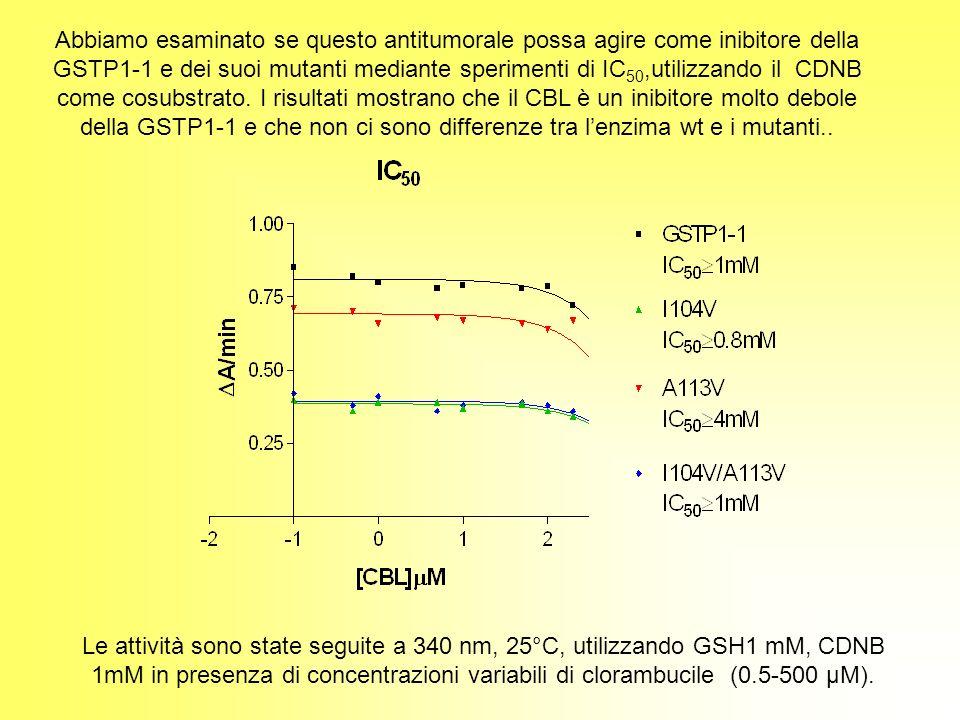 Abbiamo esaminato se questo antitumorale possa agire come inibitore della GSTP1-1 e dei suoi mutanti mediante sperimenti di IC 50,utilizzando il CDNB