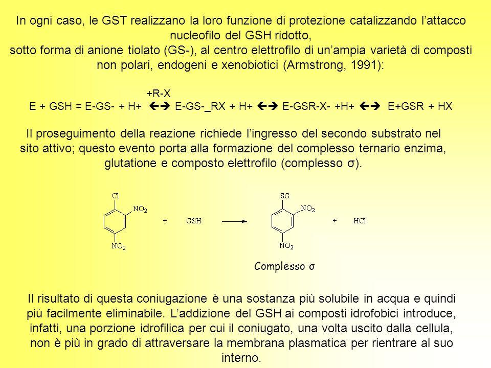 In ogni caso, le GST realizzano la loro funzione di protezione catalizzando lattacco nucleofilo del GSH ridotto, sotto forma di anione tiolato (GS-),