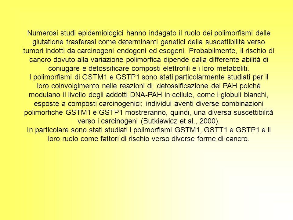 Numerosi studi epidemiologici hanno indagato il ruolo dei polimorfismi delle glutatione trasferasi come determinanti genetici della suscettibilità ver