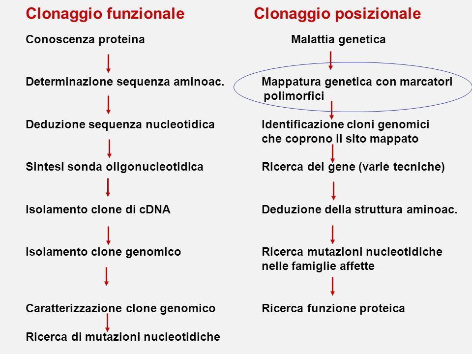 Clonaggio funzionale Clonaggio posizionale Conoscenza proteina Malattia genetica Determinazione sequenza aminoac.Mappatura genetica con marcatori poli