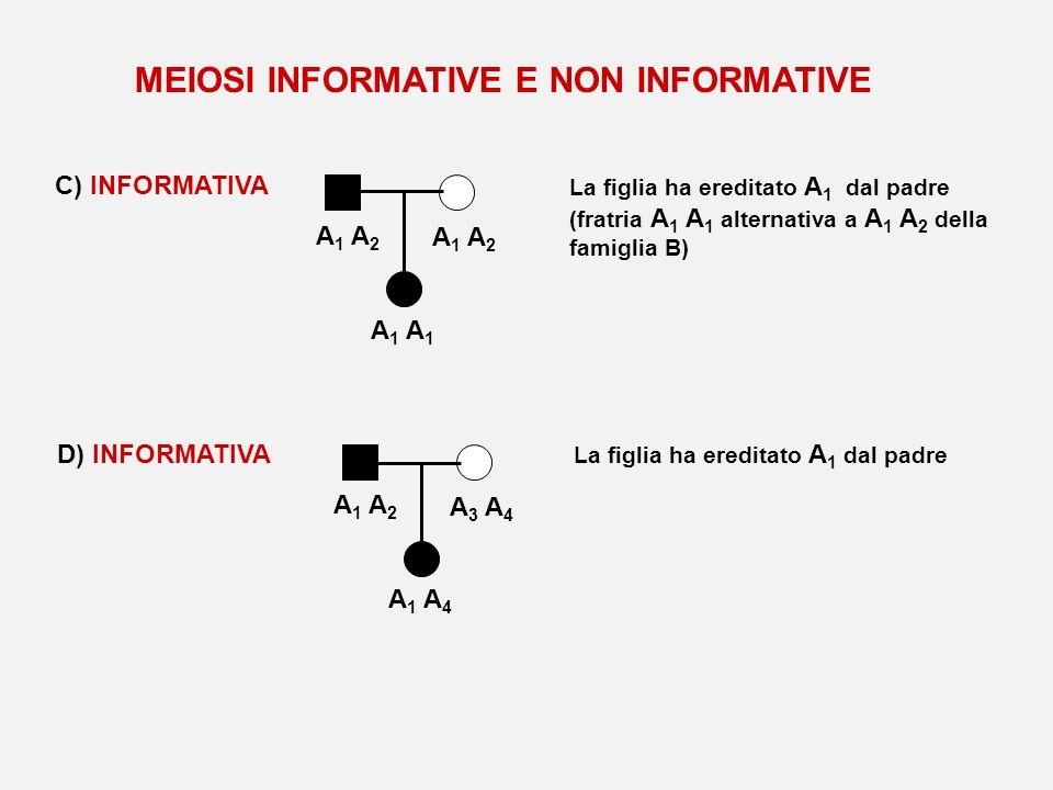C) INFORMATIVA A 1 A 2 A 1 La figlia ha ereditato A 1 dal padre (fratria A 1 A 1 alternativa a A 1 A 2 della famiglia B) D) INFORMATIVA A 1 A 2 A 3 A