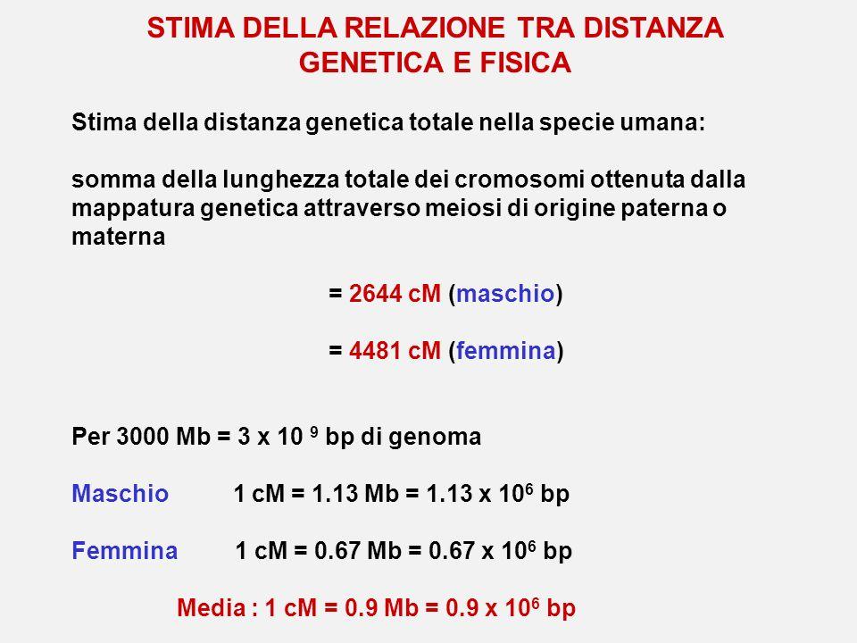 STIMA DELLA RELAZIONE TRA DISTANZA GENETICA E FISICA Stima della distanza genetica totale nella specie umana: somma della lunghezza totale dei cromoso