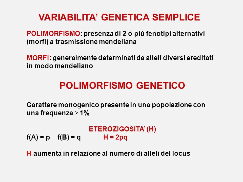 VARIABILITA GENETICA SEMPLICE POLIMORFISMO: presenza di 2 o più fenotipi alternativi (morfi) a trasmissione mendeliana MORFI: generalmente determinati