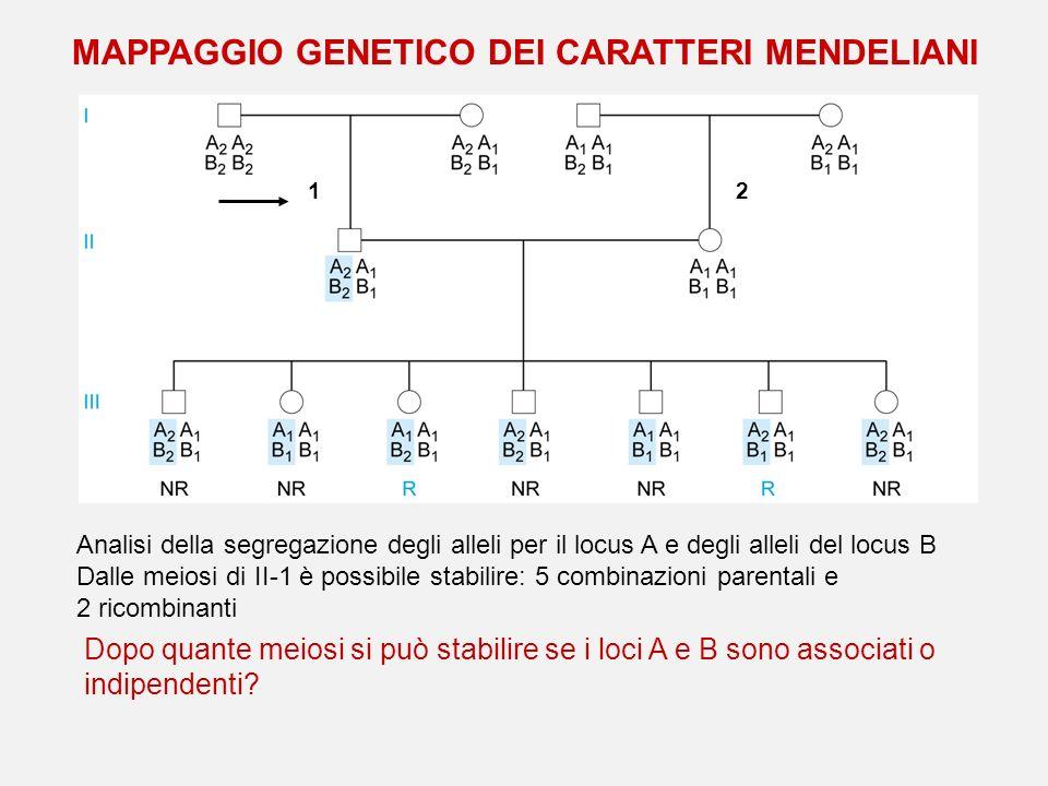 Analisi della segregazione degli alleli per il locus A e degli alleli del locus B Dalle meiosi di II-1 è possibile stabilire: 5 combinazioni parentali