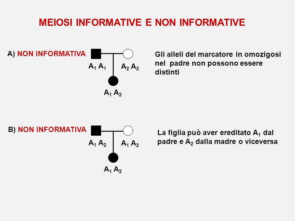 A 1 A 2 A 1 A 2 A) NON INFORMATIVA Gli alleli del marcatore in omozigosi nel padre non possono essere distinti B) NON INFORMATIVA A 1 A 2 La figlia pu