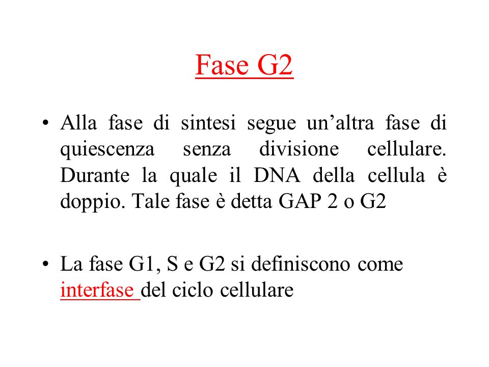 Fase G2 Alla fase di sintesi segue unaltra fase di quiescenza senza divisione cellulare.