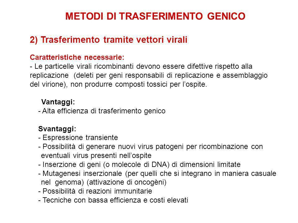 2) Trasferimento tramite vettori virali Caratteristiche necessarie: - Le particelle virali ricombinanti devono essere difettive rispetto alla replicazione (deleti per geni responsabili di replicazione e assemblaggio del virione), non produrre composti tossici per lospite.